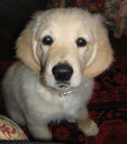 Milo, May 22 2008