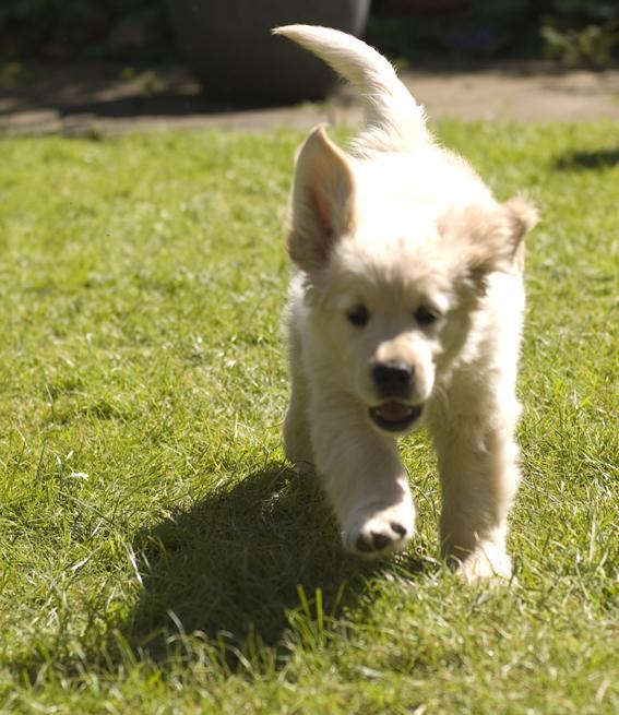 Milo running
