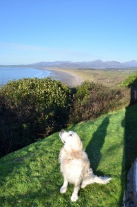 28th December: Milo sunbathing in Harlech